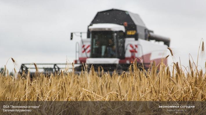 Высокие валовые сборы зерна недолжны никого запугивать - Ткачев