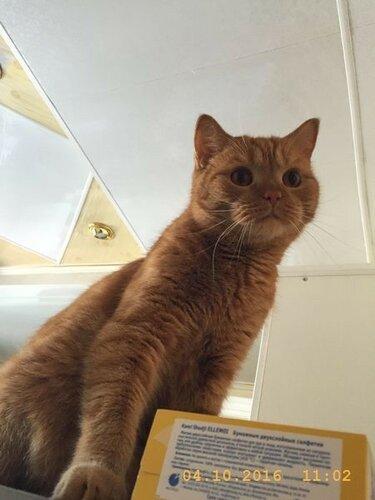 С таким кот-надзором не расслябишься