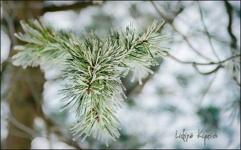 февраль  - месяц снежный