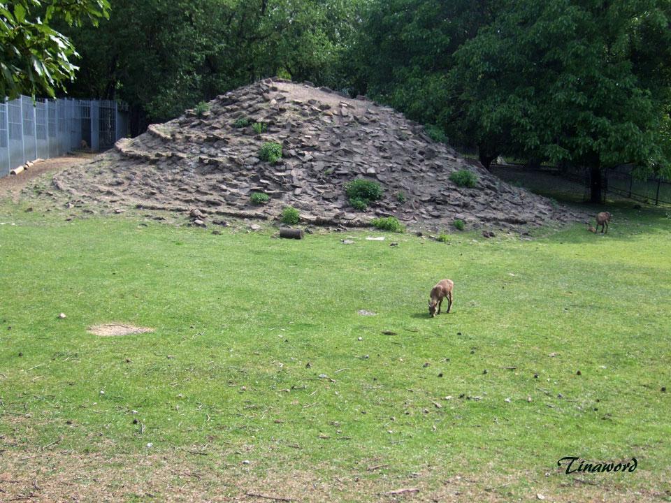 зоопарк-82.jpg