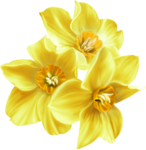 GoF_Designs_Lemon_Fresh (12).png