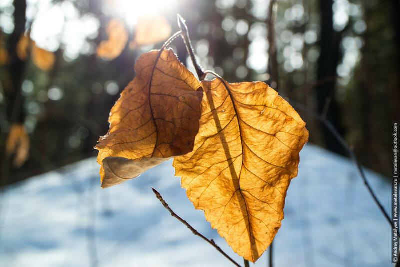 сухие желтые листья на фоне солнца