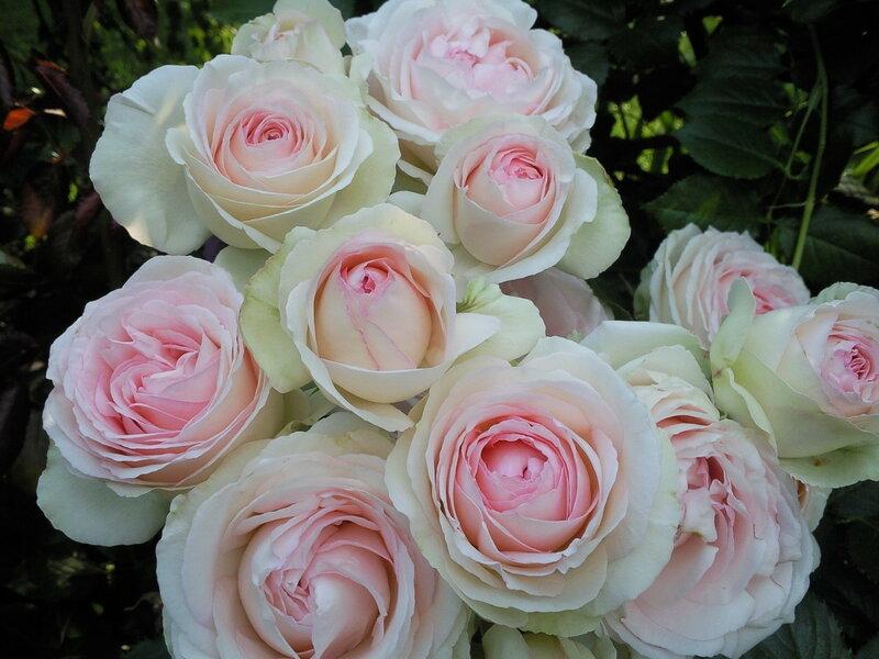 Эден Роуз,Мейян.