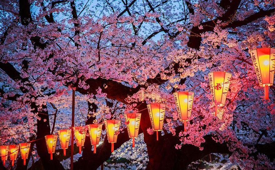 Вначале ханами посвящали цветению горной сливы. Возможно, потому, что слива начинает цвести раньше с