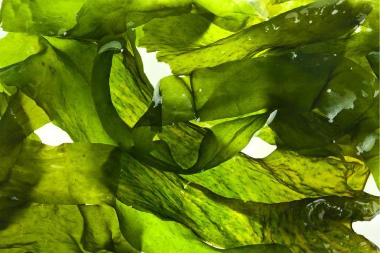 6. Морская капуста Миф. Морская капуста способна вызвать аллергическую реакцию. Правда. Морская капу