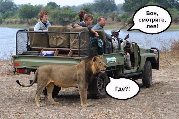 найди льва
