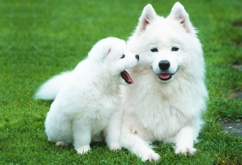 Собачки-щеночки, которых хочеться потискать— просто не удержаться!