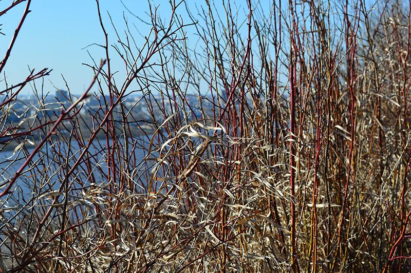 парк в апреле трава.jpg