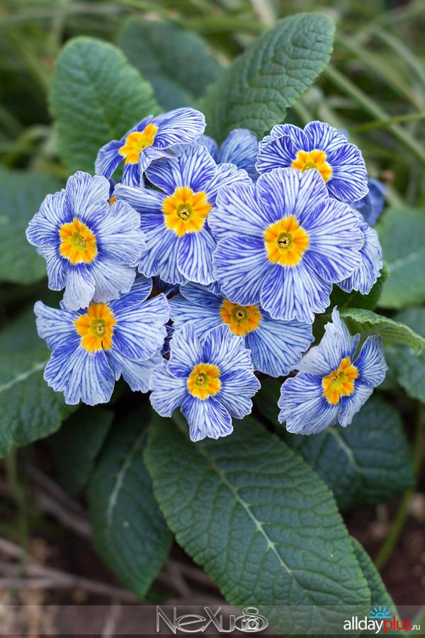 Я люблю все цветы, выпуск 211   Март 2016.