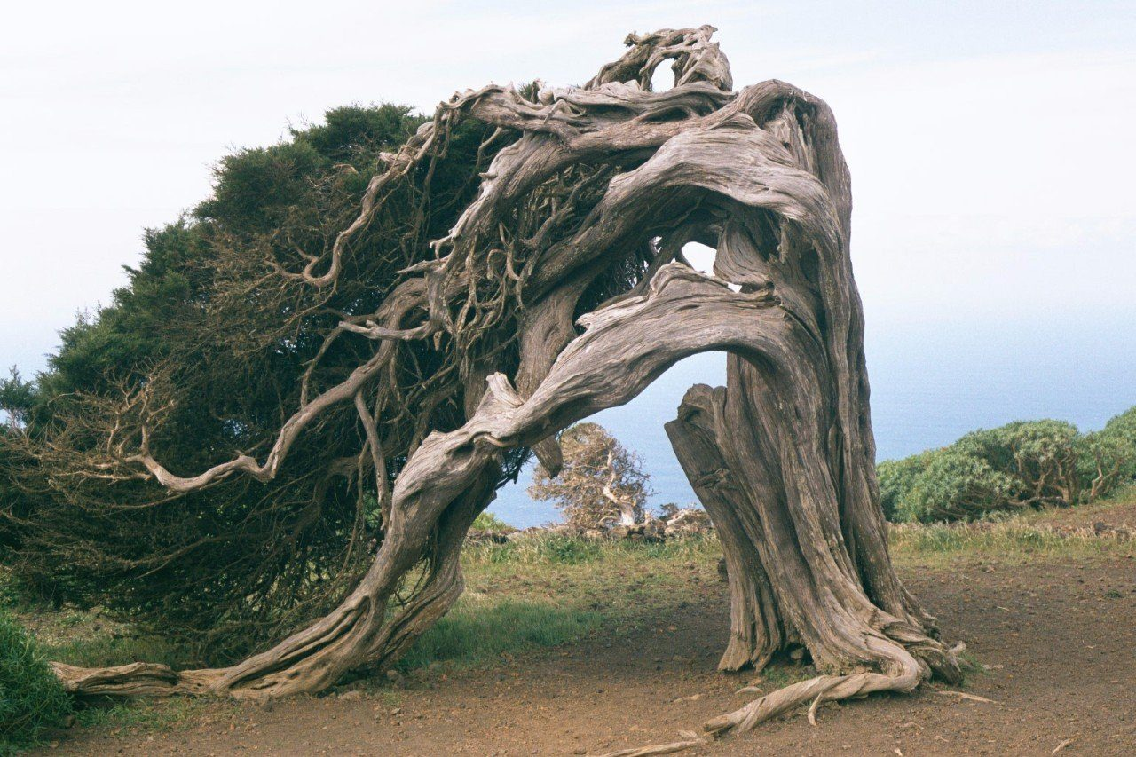 дерево за которым будут прятаться евреи видео они