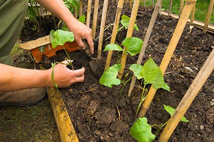 В элитных домах разводят огороды