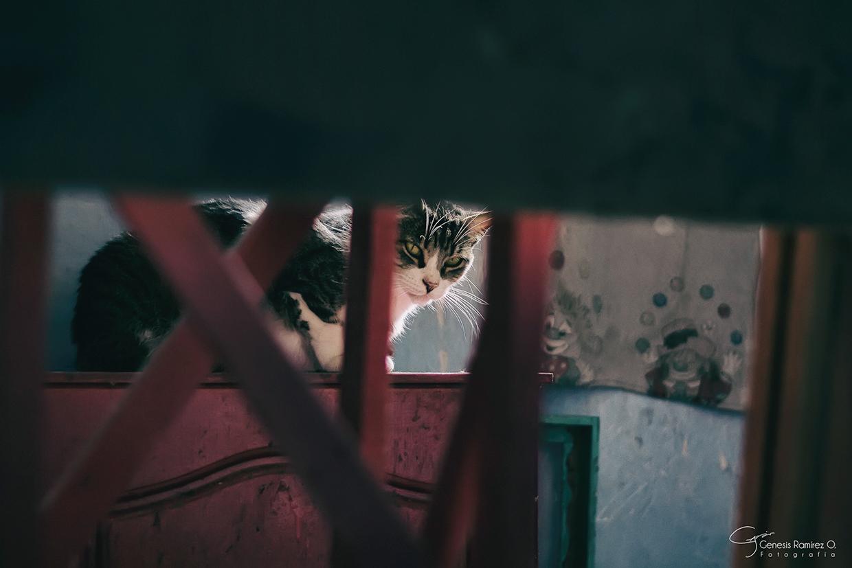 Котики Genesis Ramírez