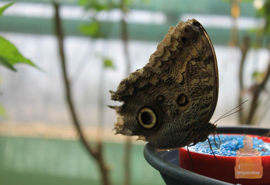 Бабочки в Будапеште