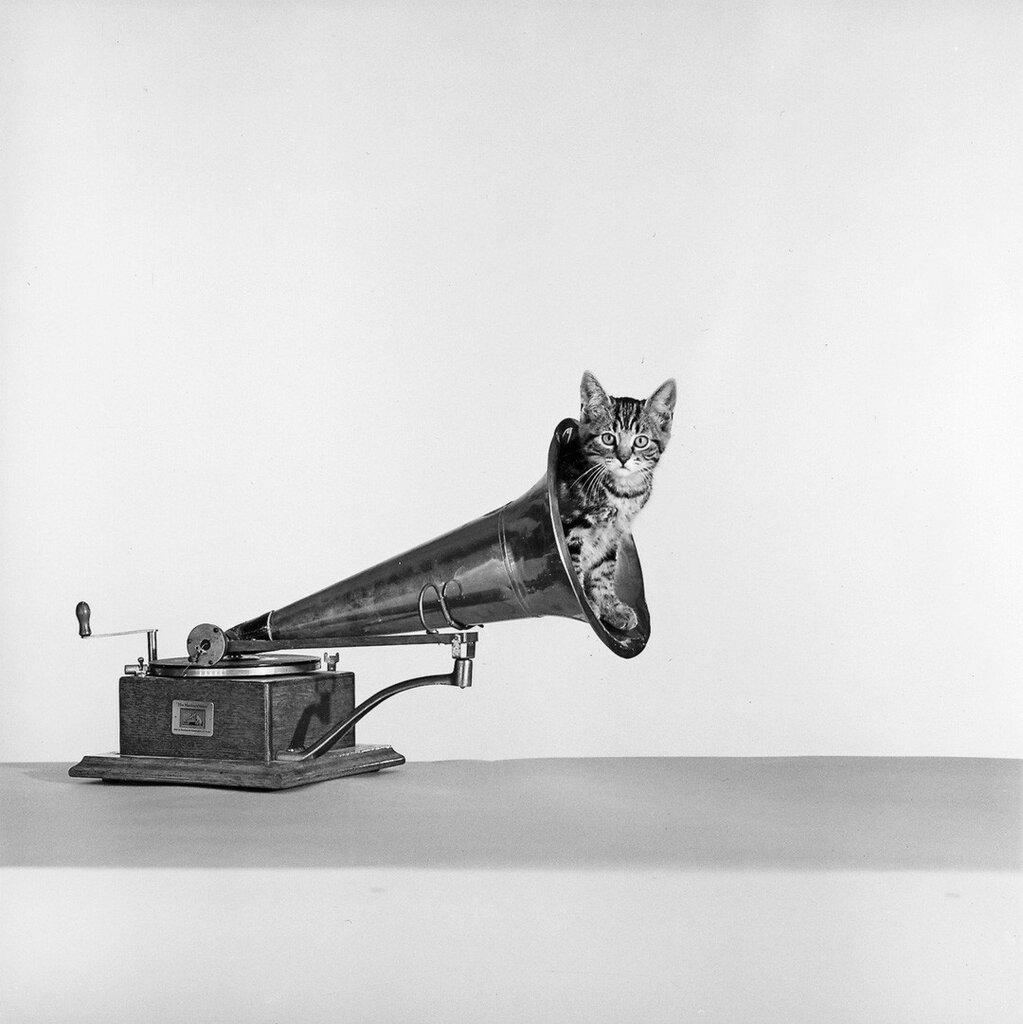 En grammofon och en katt. 1950 - 1959. Fotogra Bellander, Sten Didrik