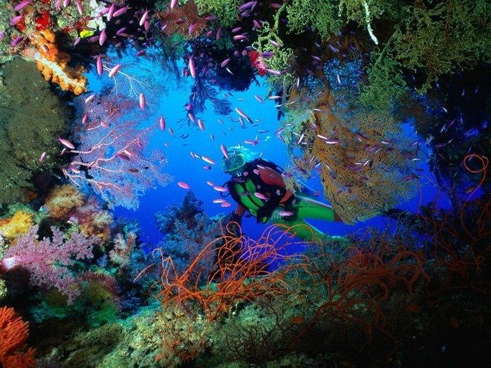 Яркий мир коралловых рифов