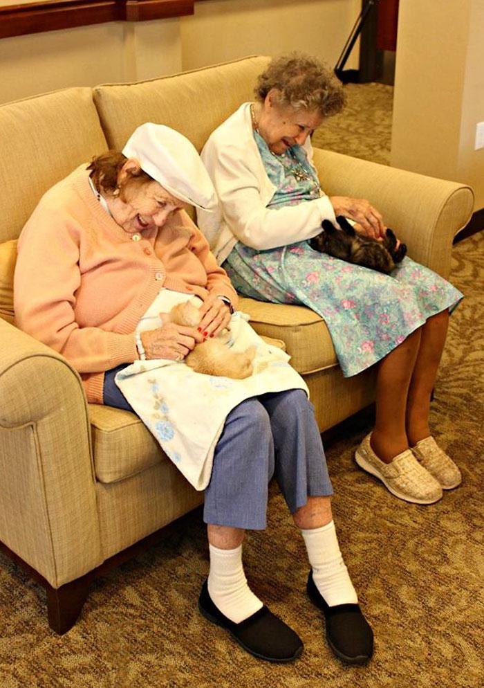 Дом престарелых, где заботятся и о пожилых людях, и о брошенных животных (7 фото)