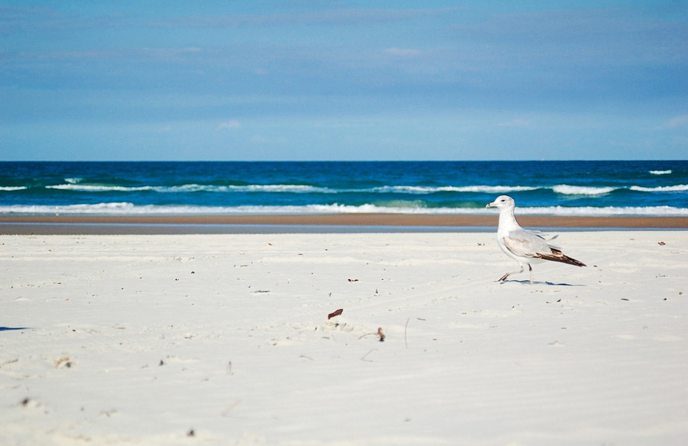 © Ben Ellis / flickr.com  Несмотря нато, что пляж считается одним излучших воФлориде, посещ