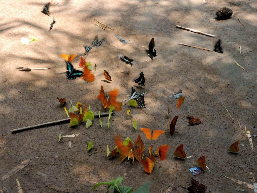 Поляна бабочек