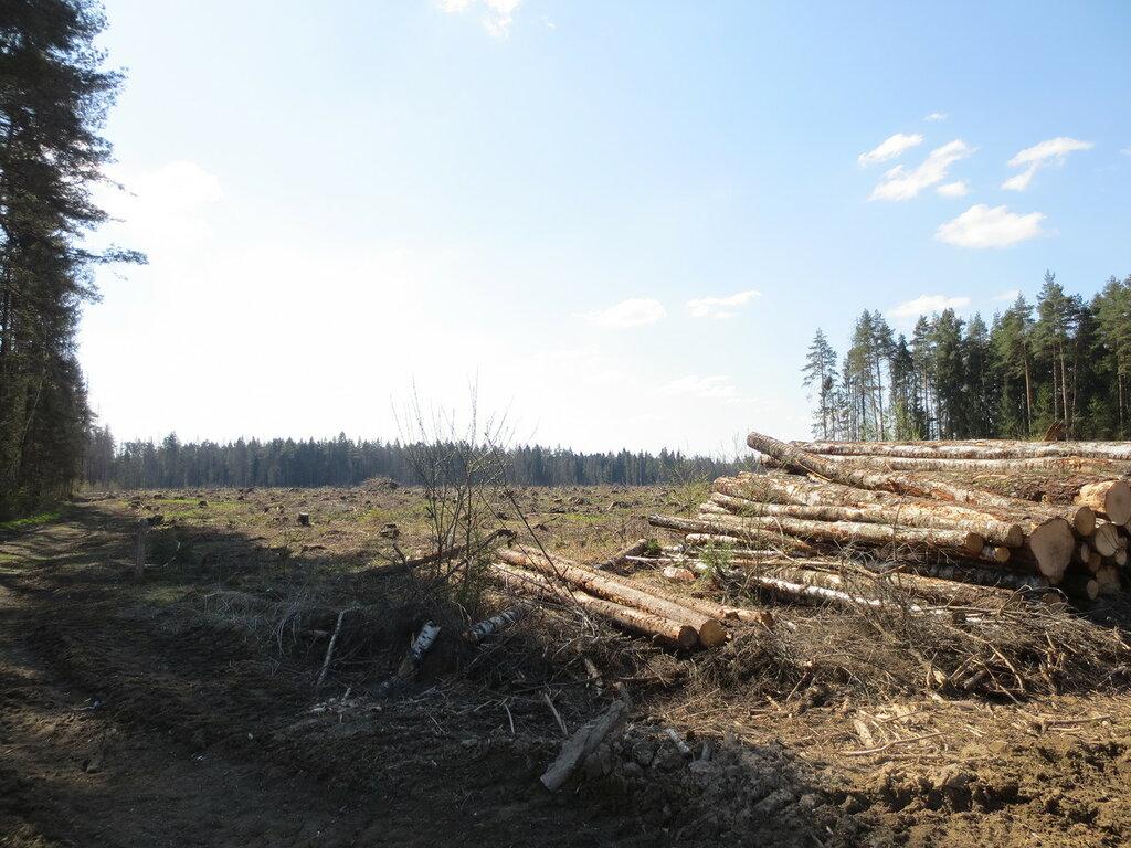 А ведь тут был лес