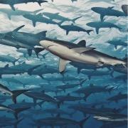 Много акул