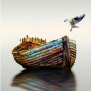 Чайка в море