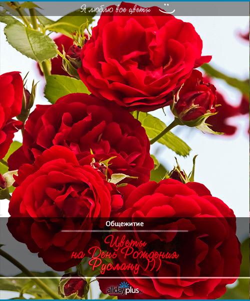 Я люблю все цветы, часть 14