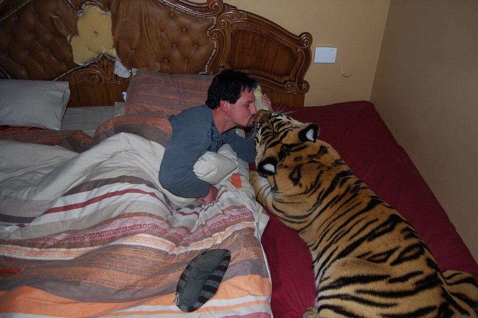 Рёв бенгальского тигра слышен
