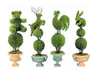 Все о растениях для топиария