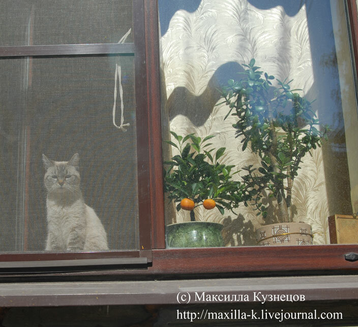 Натюрморте с котэ.