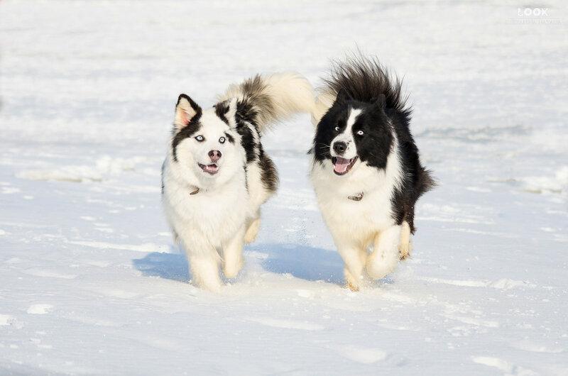 Мои собаки: Зена и Шива и их друзья весты - Страница 9 0_a842b_8a26da28_XL
