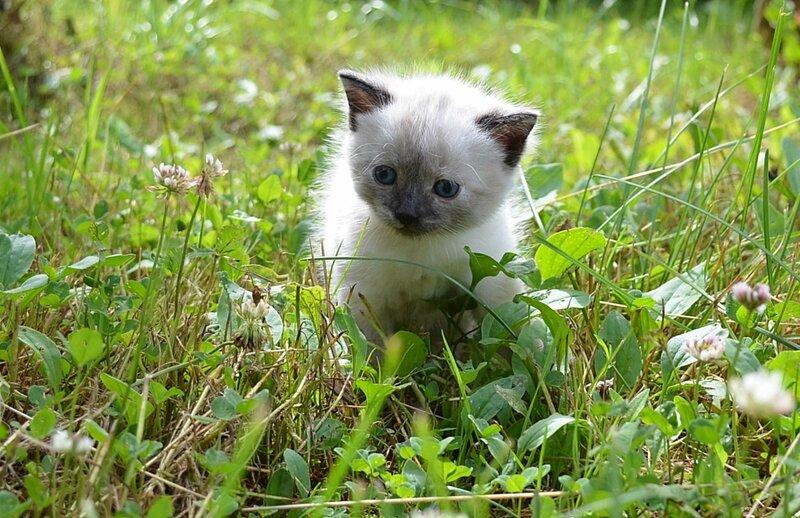Котенок по имени Гав!