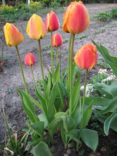 Annaze63 — фотографии за 30 апреля 2010 на