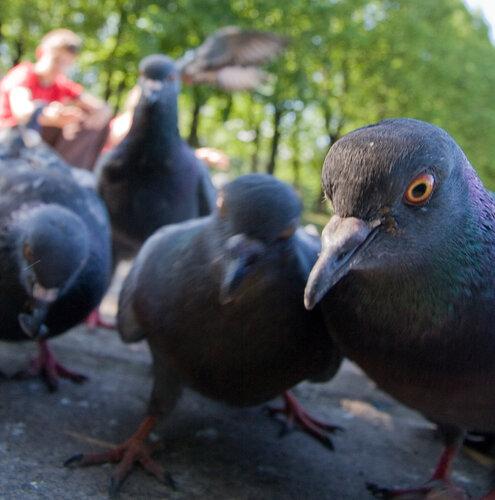 голубчики... Так тоже можно фотографировать птичек :)