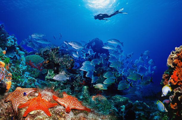 A snorkeler swims above a reef where numerous species of fish, coral and other animals thrive.