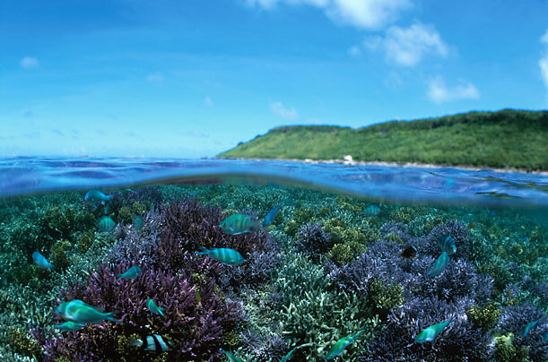 A coral reef booms with life off Miyako Island, Okinawa.