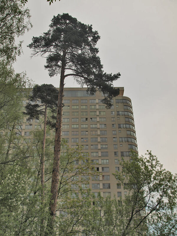 http://img-fotki.yandex.ru/get/55/parktower99911.13/0_325ba_cb314808_XL.jpg