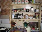Кошка на полке.JPG