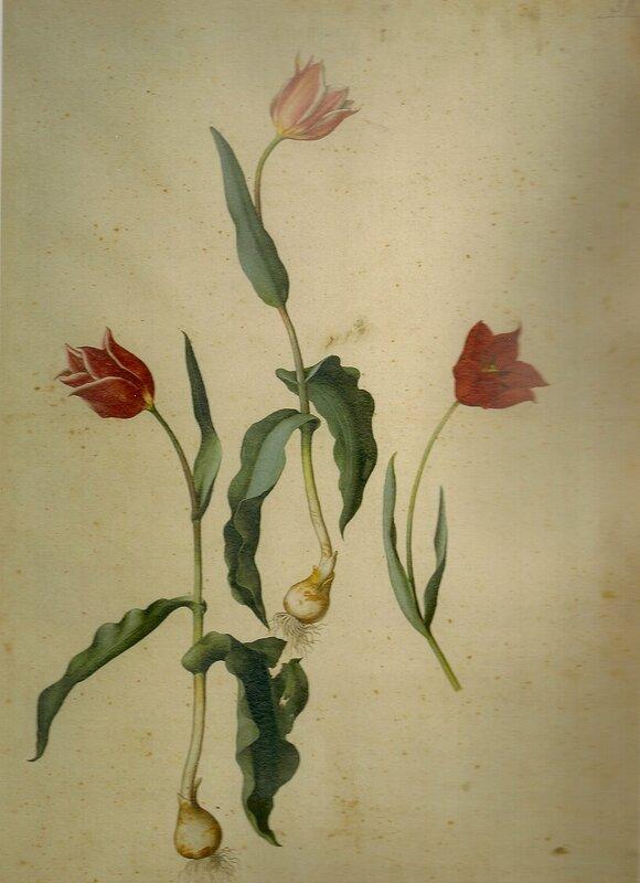 Рисунок из гуаши
