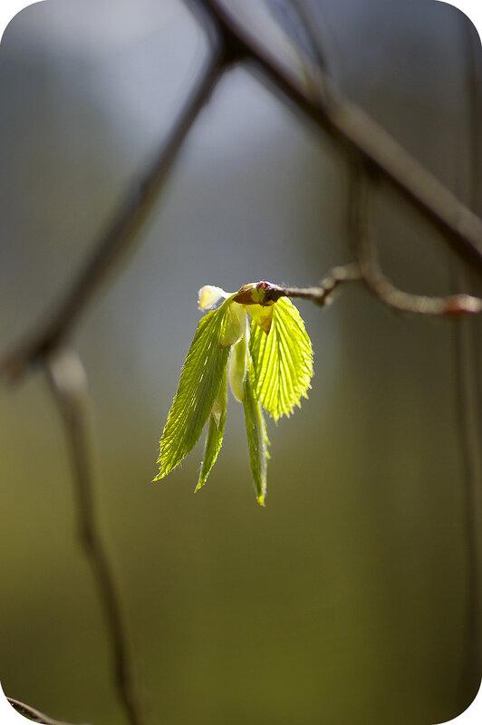 Молодые крылья