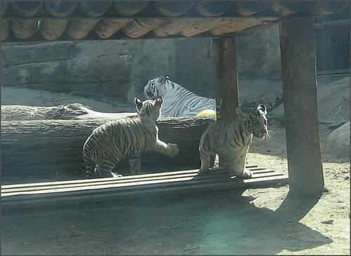 Зоопарк 8 июля 2008