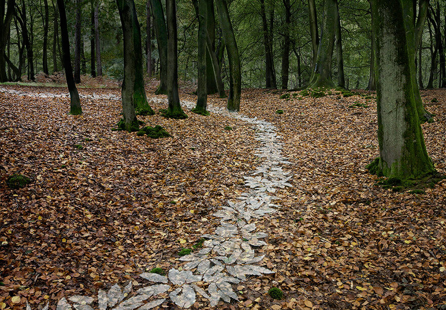 Into the woods, Ellie Davies1280.jpg