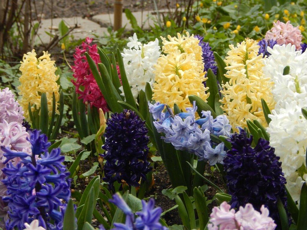 цветы фото на огороде