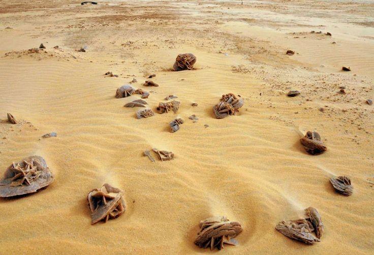 роза пустыни фото тунис