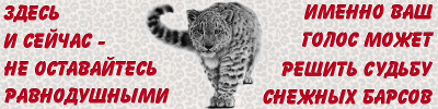 resque the snow leopard