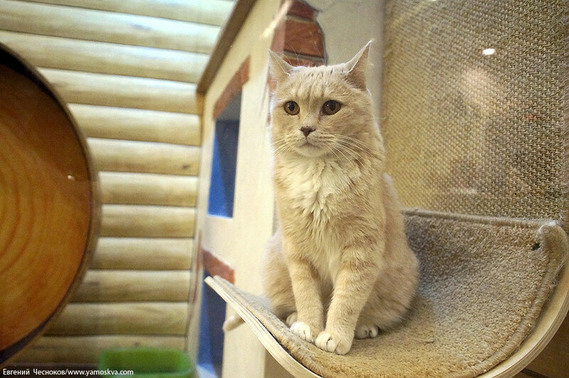 Осень. Театр кошек. Кошки. 15.10.15.04..jpg