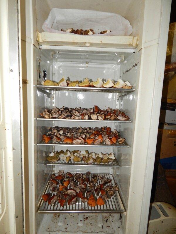 Сушка из холодильника