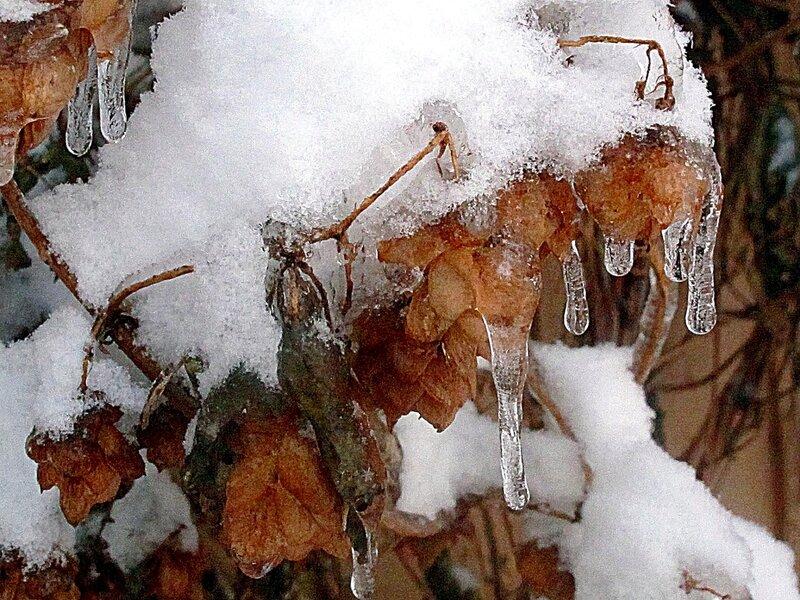 Зима,с.Остров,подворье,райский садик
