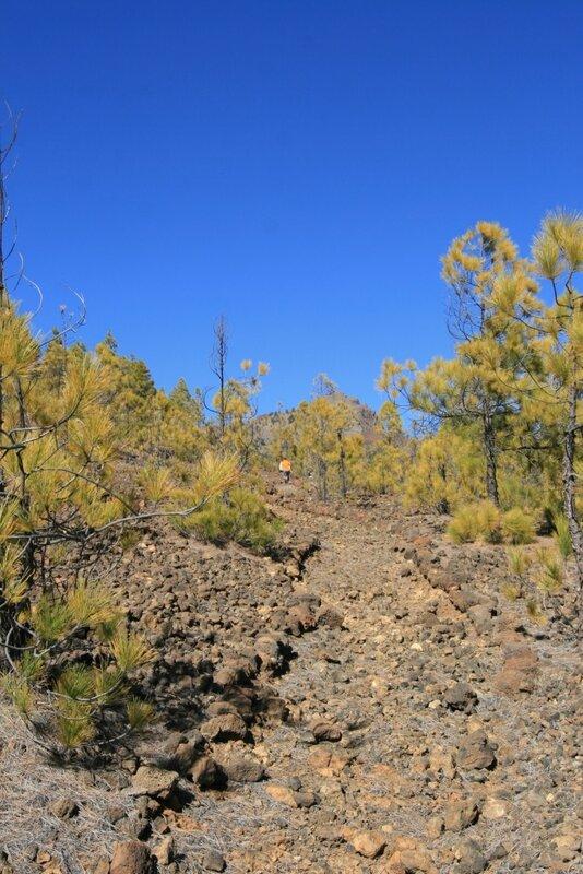 Тенерифе, дорога к Лунному пейзажу, пешеходная тропа в лесах Вилафлора