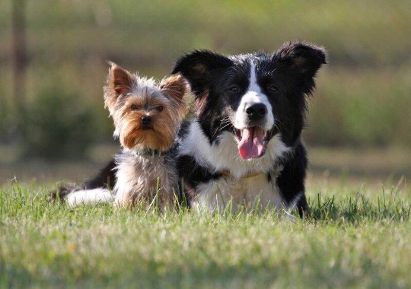Живой мир / Фотогалерея / Animals - мы любим ...: blogs.privet.ru/community/we_love_animals70/100384666