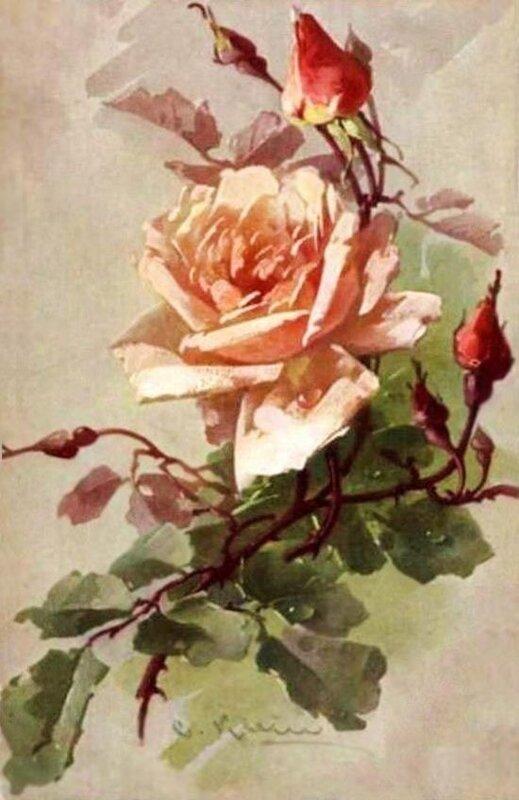 К. Кляйн. Роза.